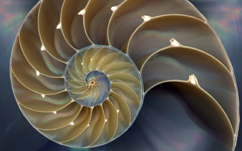 Computational Thinking and Coding the Fibonacci Series